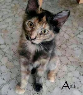 Ari-0