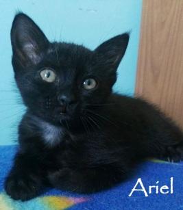 Ariel-01