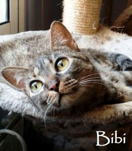Bibi-0b