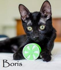 Boris-0