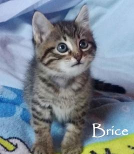 Brice-0