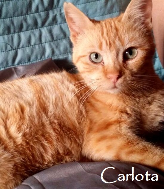 Carlota-0