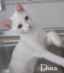 Dina-03