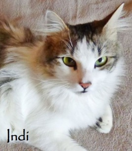 Indi-0p