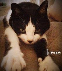 Irene-0