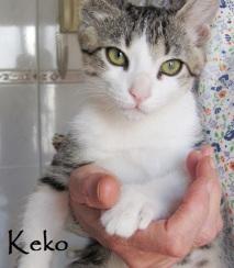 Keko-0
