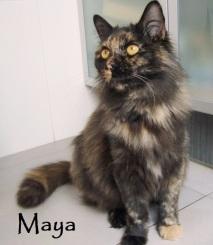 Maya-0b