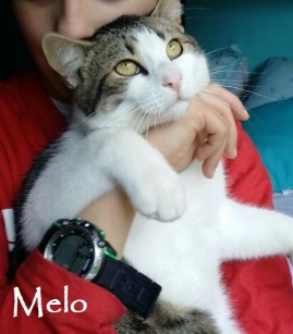 Melo-0n