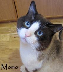 momo-0