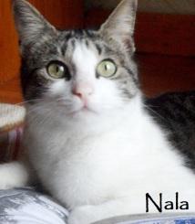 Nala-0b