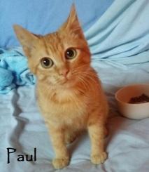 Paul-02