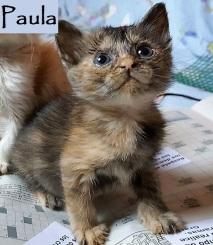 adoptada