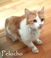 Pelocho-0b