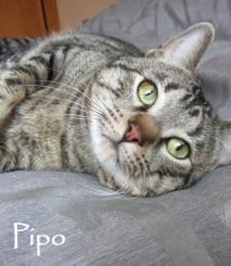 Pipo-0b