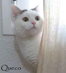 queco-0