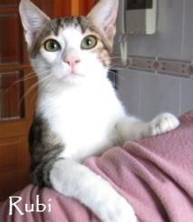 Rubi-03