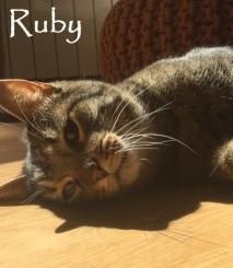 Ruby-074