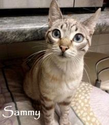 Sammy-0