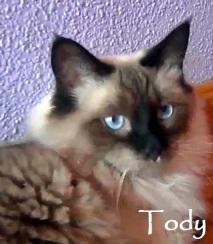 toby-0d