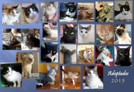adoptados2015