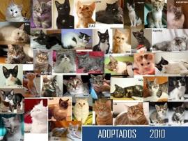 adoptados2010