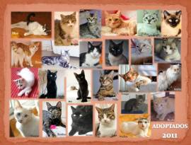 adoptados2011