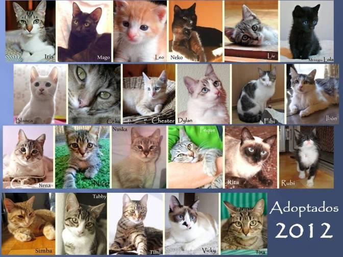adoptados2012