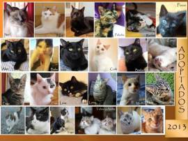adoptados2013s
