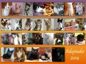 adoptados2014