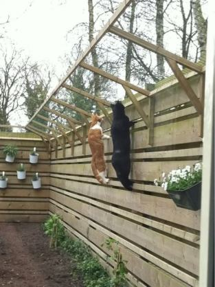 Consejos zaragatos gatos en adopci n zaragoza for Ahuyentar gatos de mi jardin