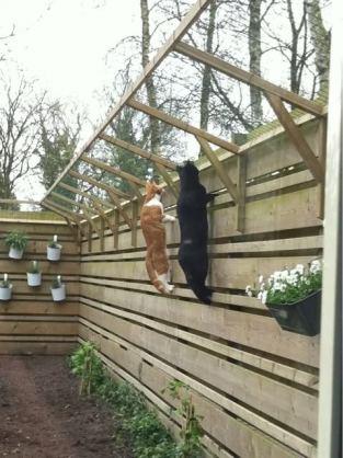 Consejos zaragatos gatos en adopci n zaragoza - Vallar un terreno ...