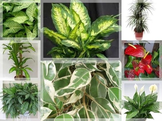 plantas-toxicas b