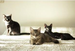 presentación-gatos-b
