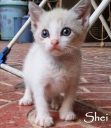 Shei-08