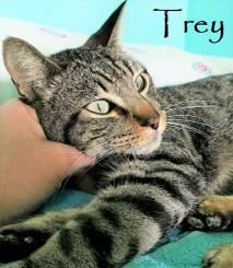 trey adoptado