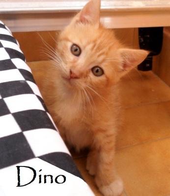 Dino-0