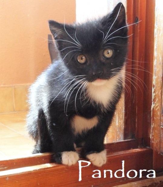 Pandora-0