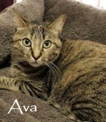 Ava-030