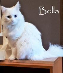 Bella-0b