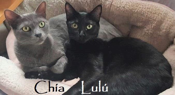 Chia,Lulu-018
