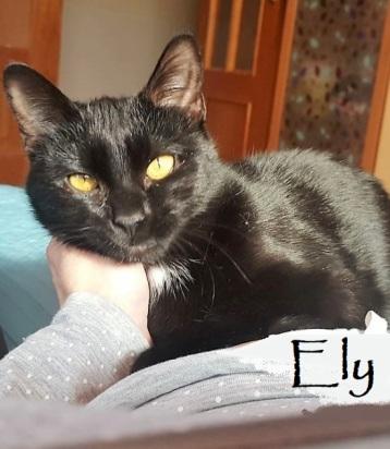 Ely-0