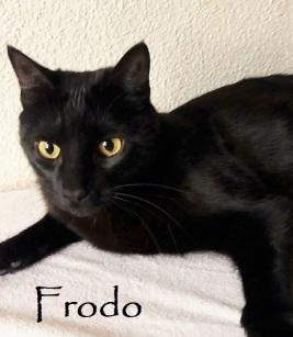 Frodo-04