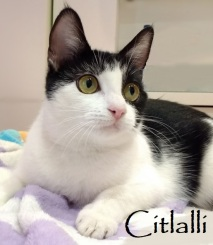 Citlalli-0