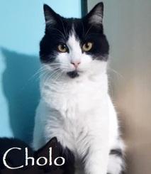 Cholo-0