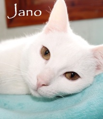 Jano-01