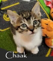 Chaak-0