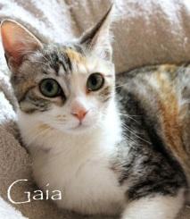 Gaia-0