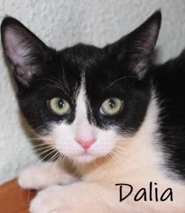 Dalia-0
