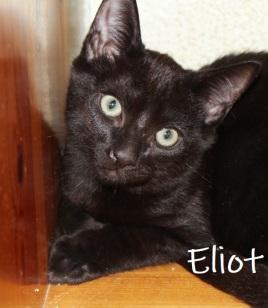 Eliot-0