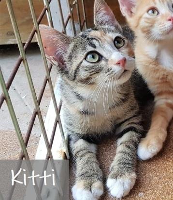 kitti-0